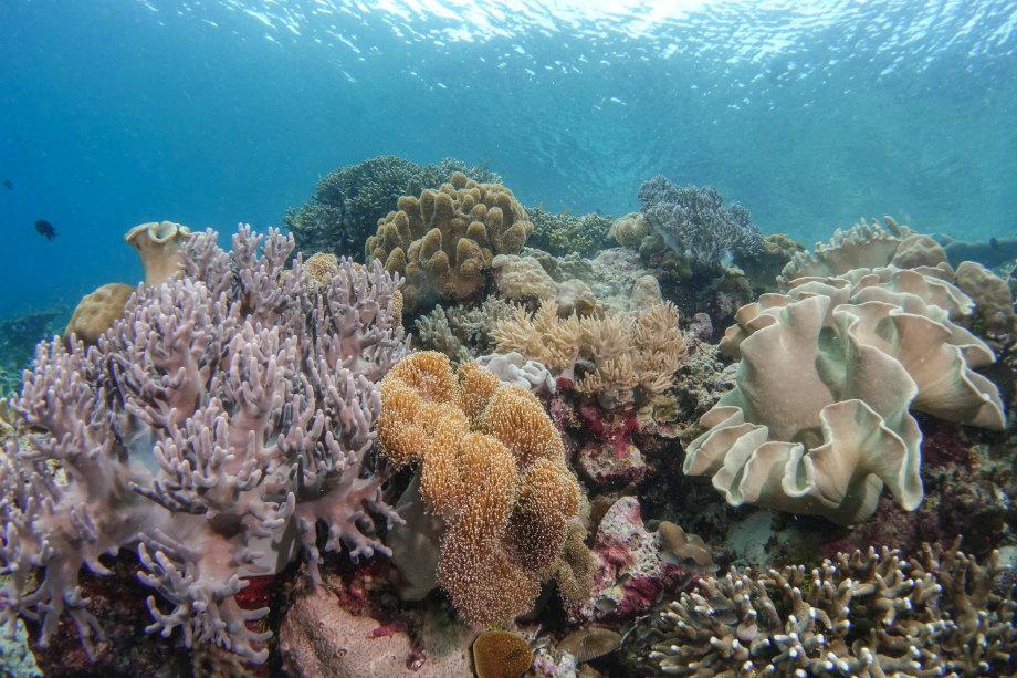 Corals Wakatobi Sulawesi Dive Trek Baubau