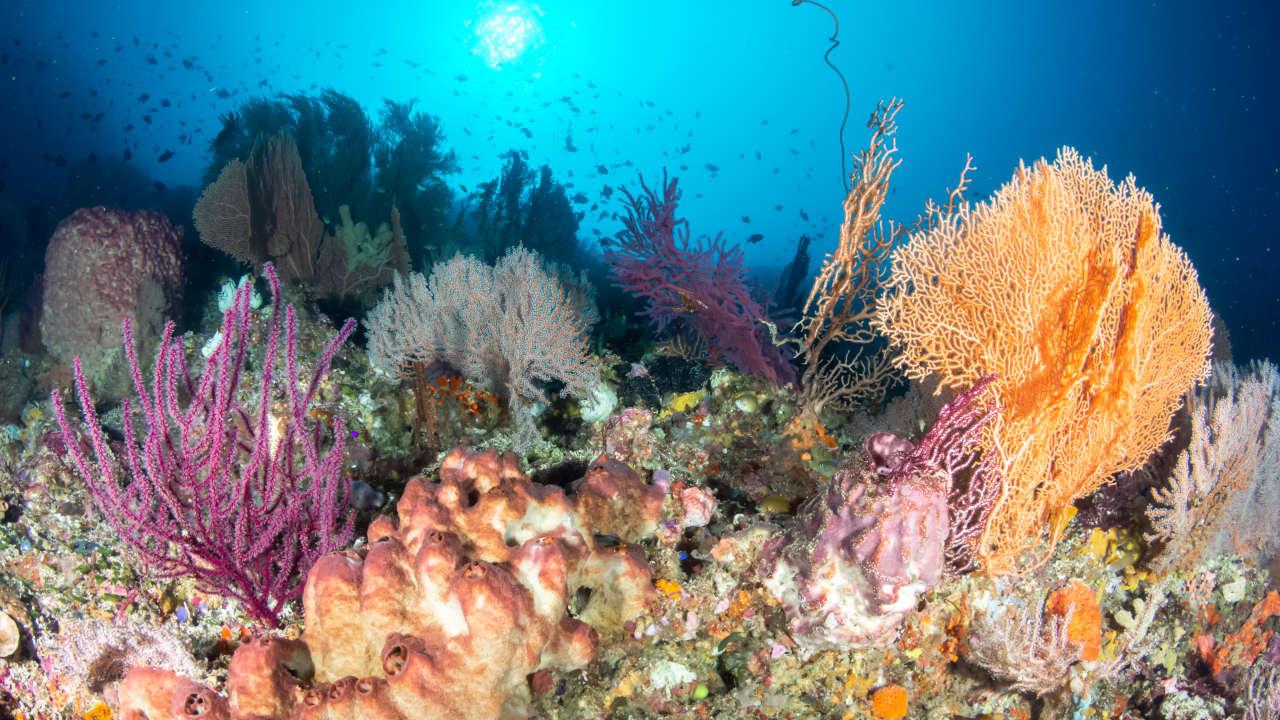Reef Wakatobi